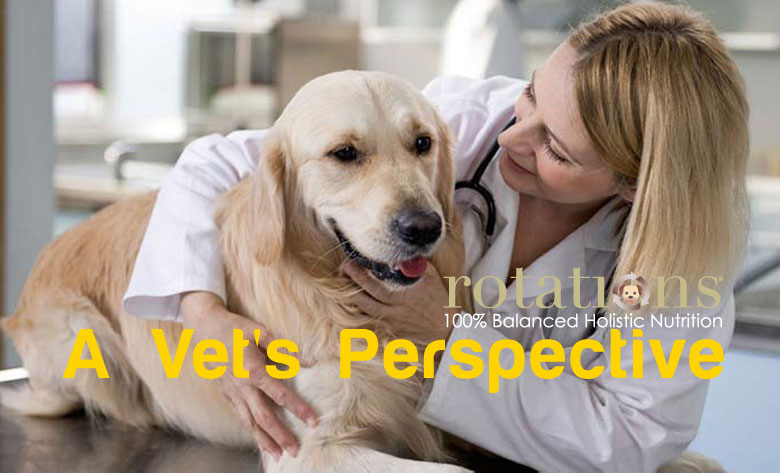 A Vet's Perspective